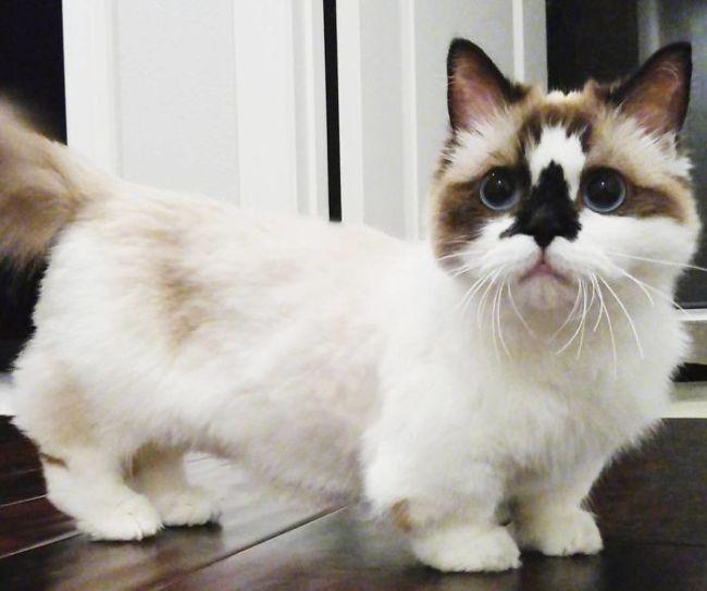 Кот по кличке Альберт - еще одна звезда соцсетей