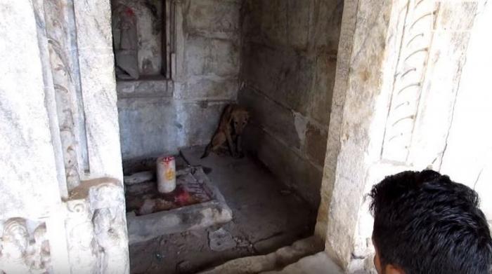 Раненый щенок пришел в храм, чтобы найти укрытие
