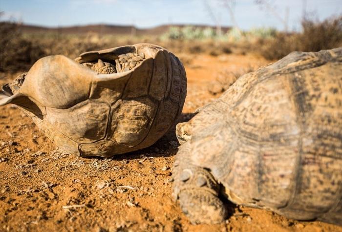 Вы видали как спариваются черепахи?