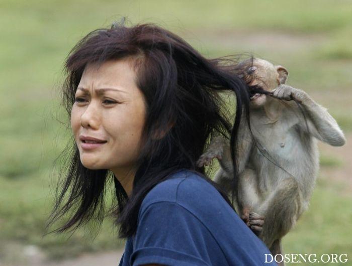Животные против женщин