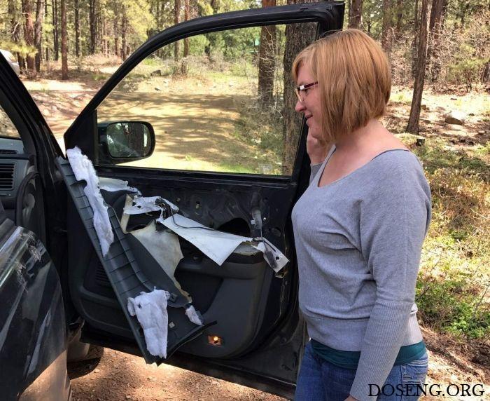 Медведь закрылся в автомобиле