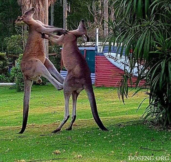 Тем временем в Австралии