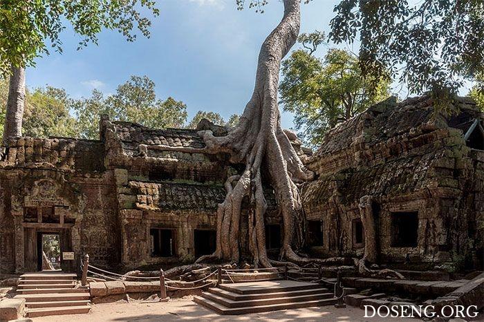 Деревья, растущие в необычных местах