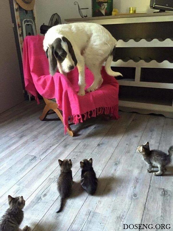 Серия доказательств того, что дружба собак и кошек – исключение