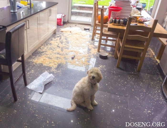 Когда твоя собака - монстр с невинной мордой