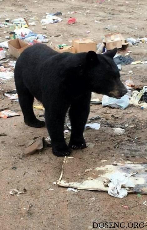 Медведь комфортно устроился на выброшенном диване