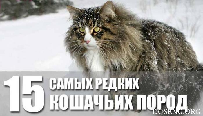 15 редких кошачьих пород со всего мира