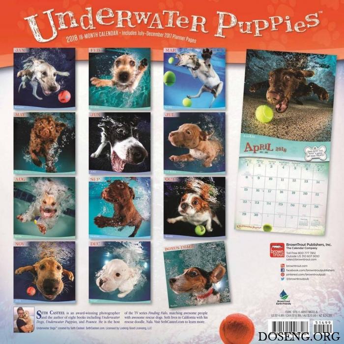 Забавный календарь с ныряющими пёсиками