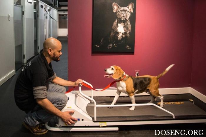 Педикюр, двуспальные кровати и 24-часовой уход роскошный отель для собак в Нью-Йорке