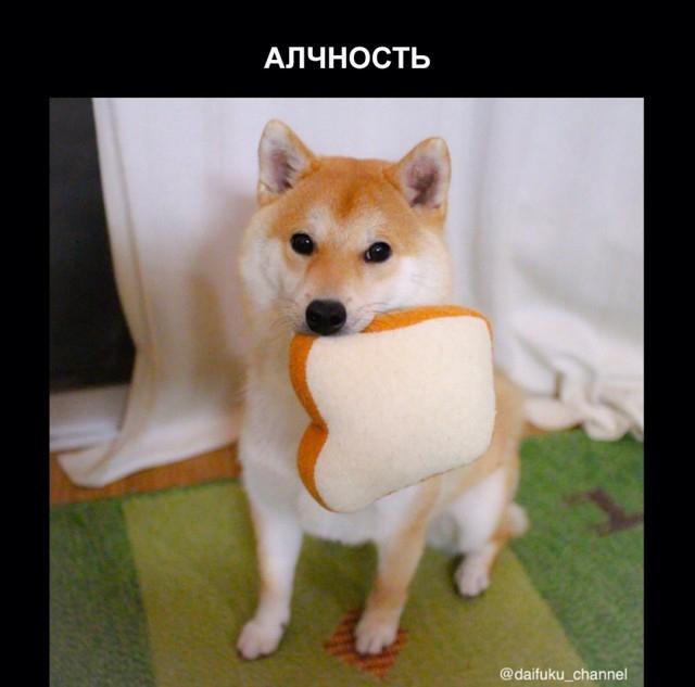 Забавная собака породы сиба-ину и семь смертных грехов