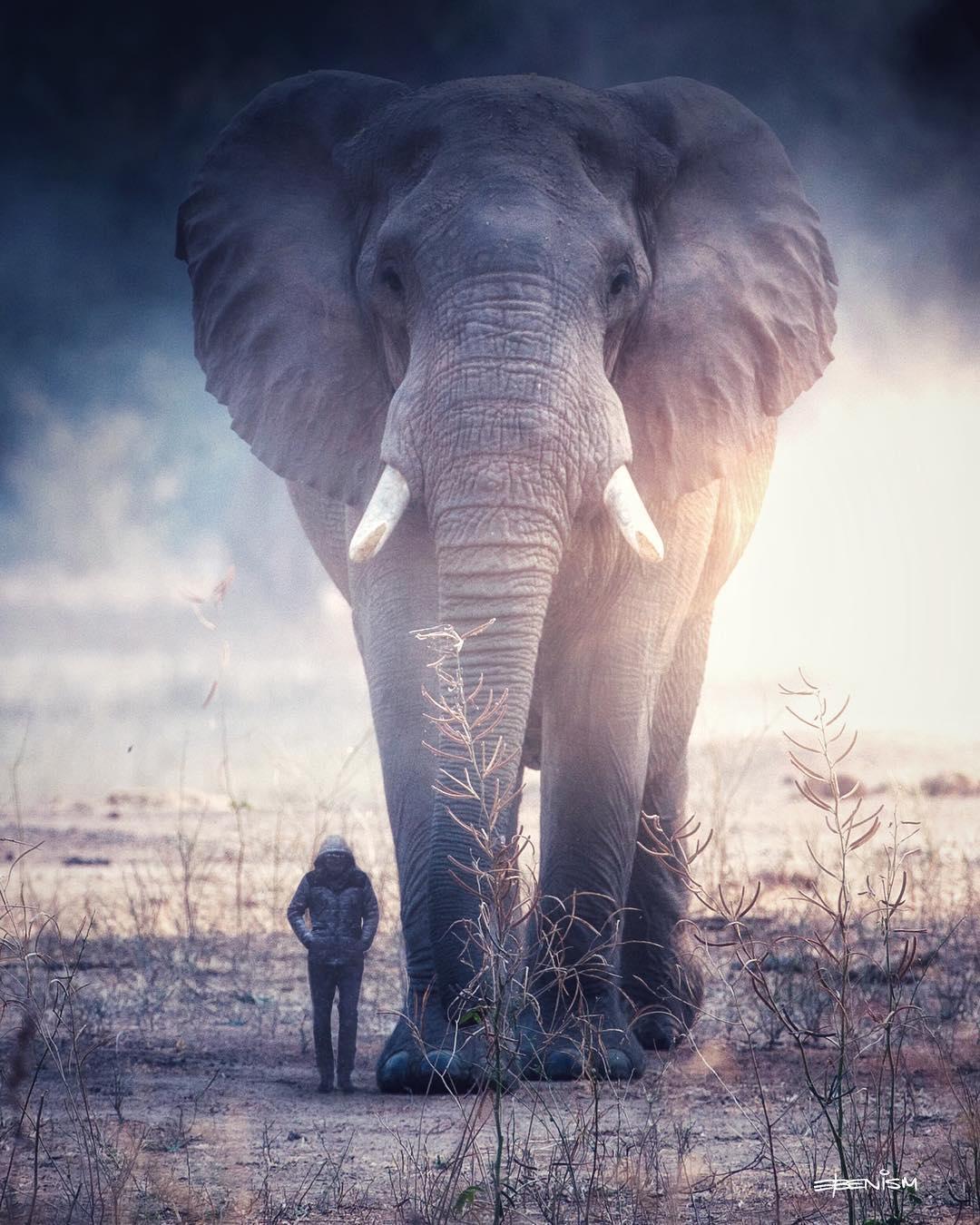 Картинки большие животные маленькие люди в мире
