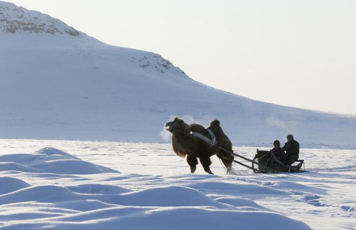 Интересные кадры из Сибири