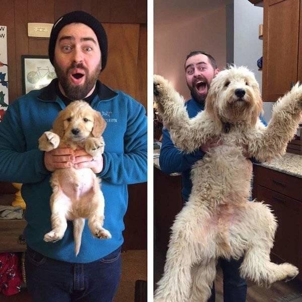 Фотоснимки собак, воссозданные спустя время