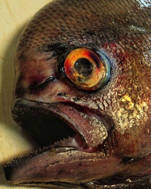 Рыбак фотографирует самых необычных обитателей моря