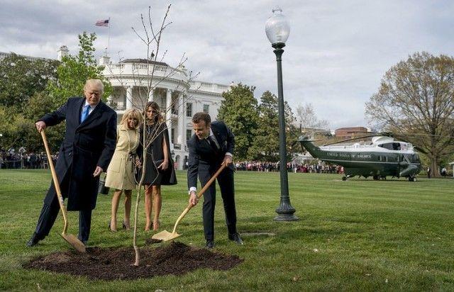 Сажающие дерево Трамп и Макрон стали героями фотожаб