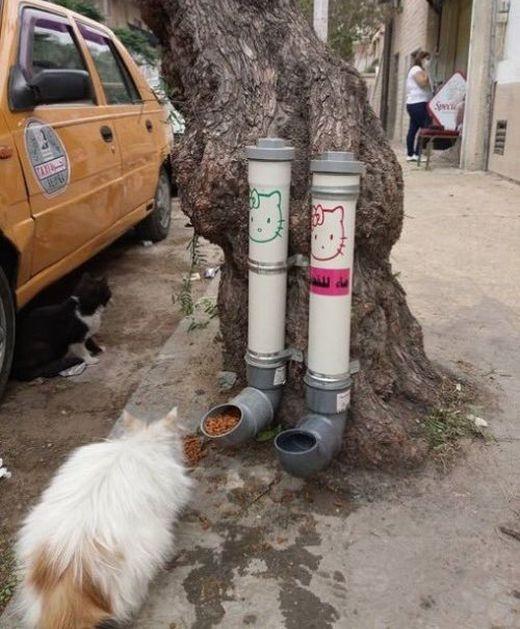 Уличные кормушки и поилки для кошек в сирийском Дамаске