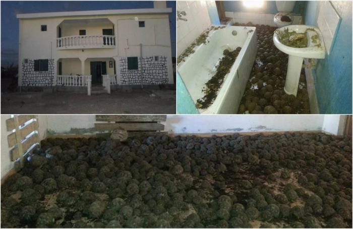10 000 редких черепах найдены в двухэтажном доме на Мадагаскаре