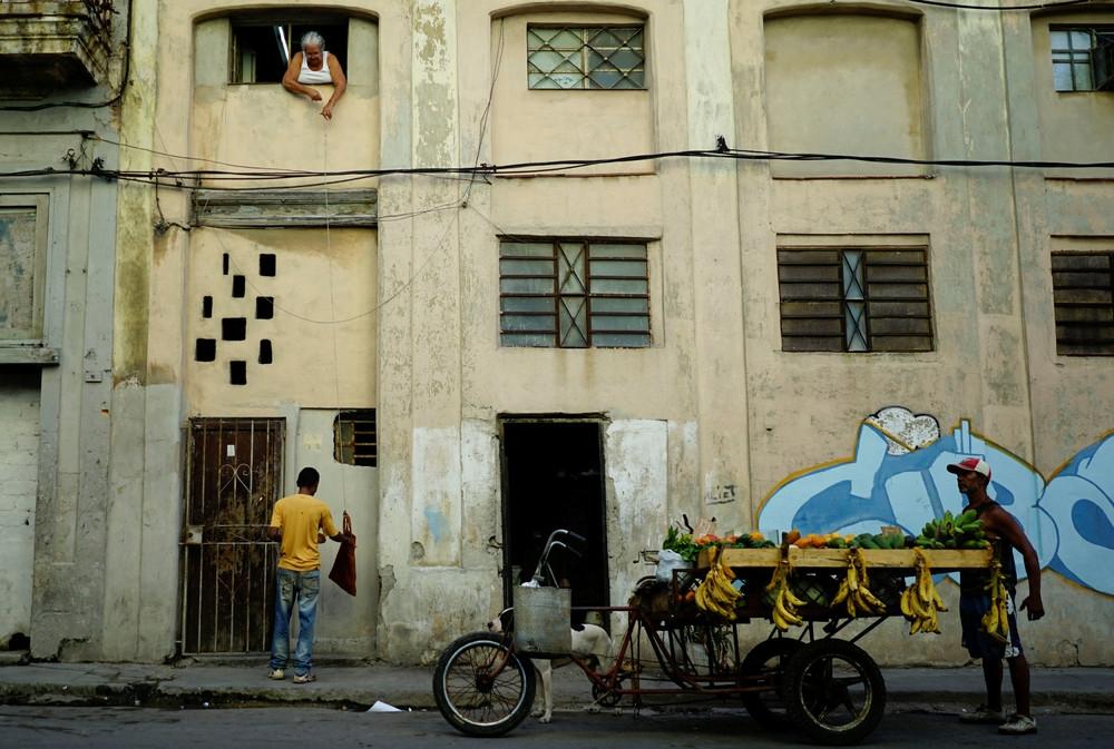 удачно как живут кубинцы фото подходить лошади сзади