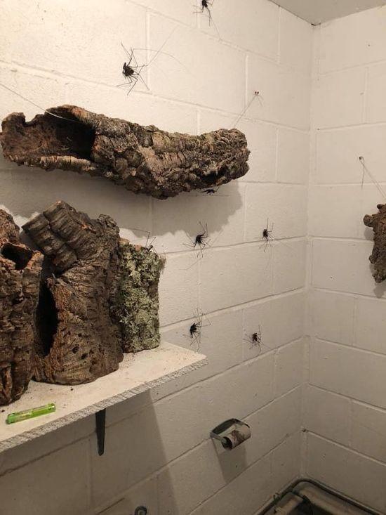 Туалет из кошмарных снов