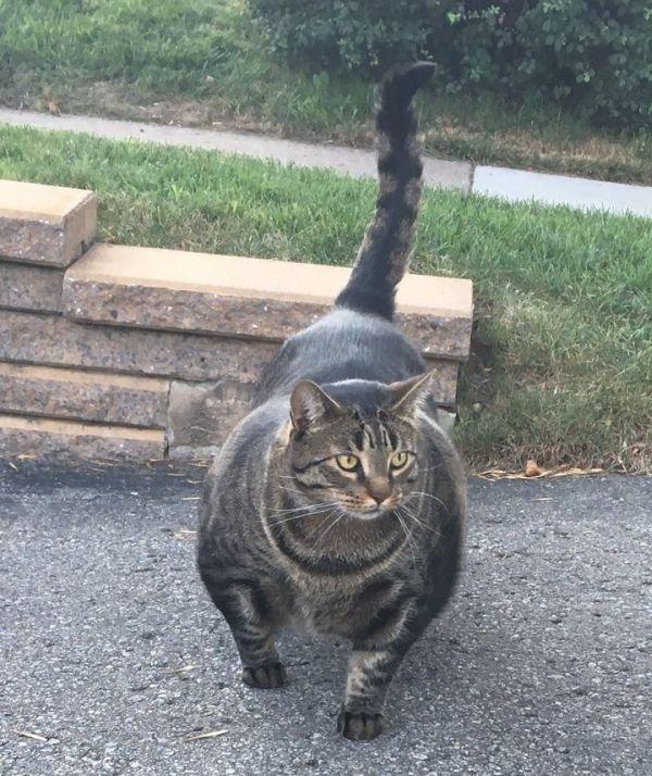 «Кот-качок» удивил пользователей сети