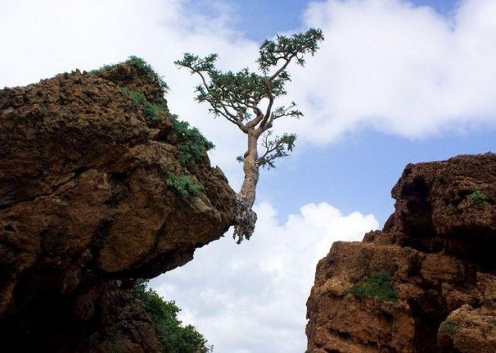 Удивительные формы природы
