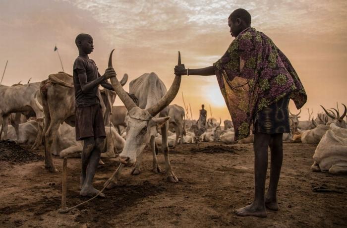 Племя Динка они берут имена быков и моют головы коровьей мочой