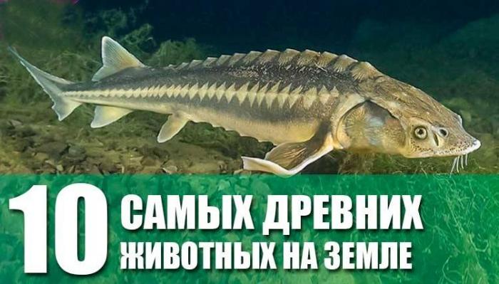 ТОП-10 древнейших животных на земле