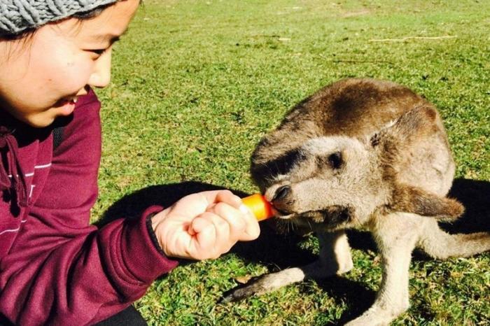 Кенгуру нападают на туристов из-за морковки