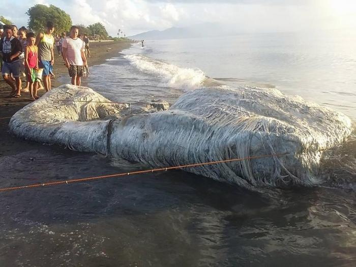 Таинственное морское существо прибило к берегу на Филиппинах