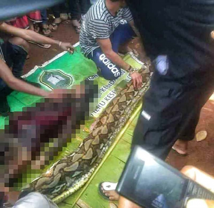 Питон проглотил женщину в Индонезии