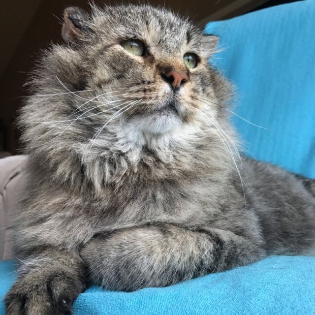 10-летний уличный кот нашел себе новый дом