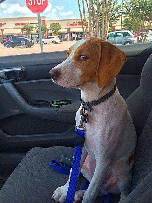 Животные не любят поездки к ветеринару