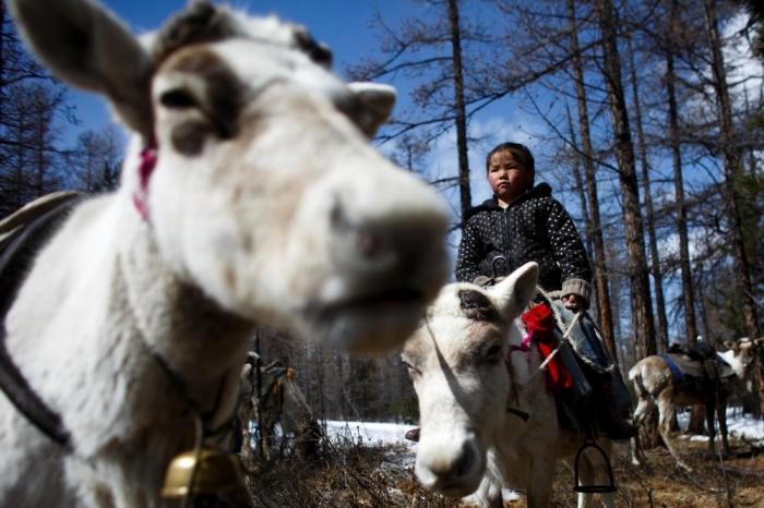 Исчезающее племя монгольских оленеводов