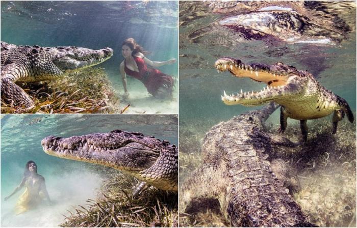 Храбрые модели в фотосессии с огромными крокодилами
