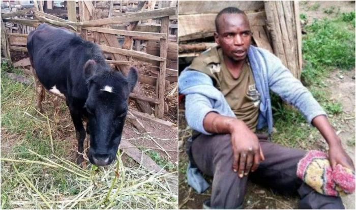 Кенийца застукали во время изнасилования соседской коровы и чуть не забили до смерти