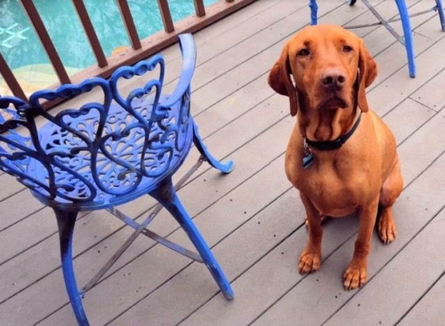Хозяин застыл от ужаса, когда увидел, насколько его собака по нему соскучил ...