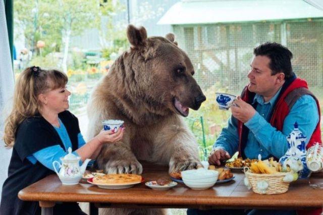 Медведь Степан, который уже 20 лет живет в семье дрессировщиков