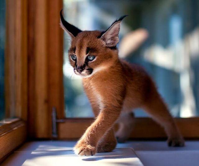 Самые красивые и необычные кошки