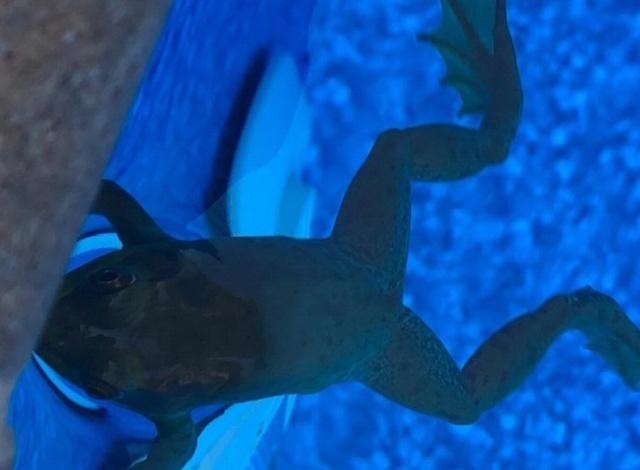 Умная лягушка, которой не приходится заботиться о пропитании