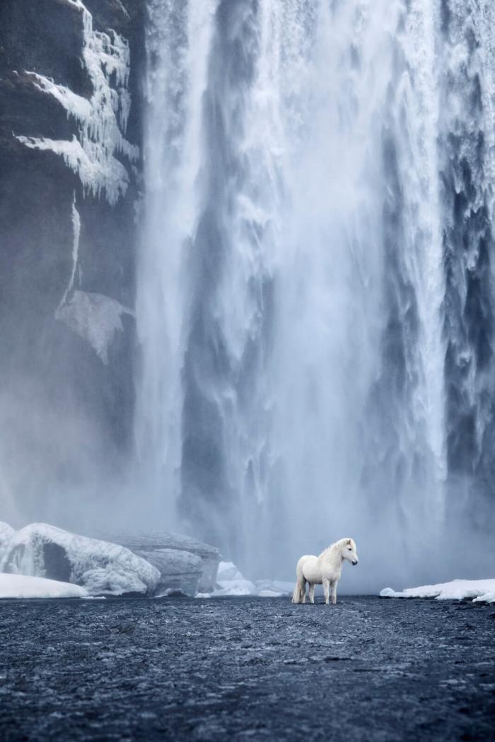 Лошади среди эпических исландских пейзажей