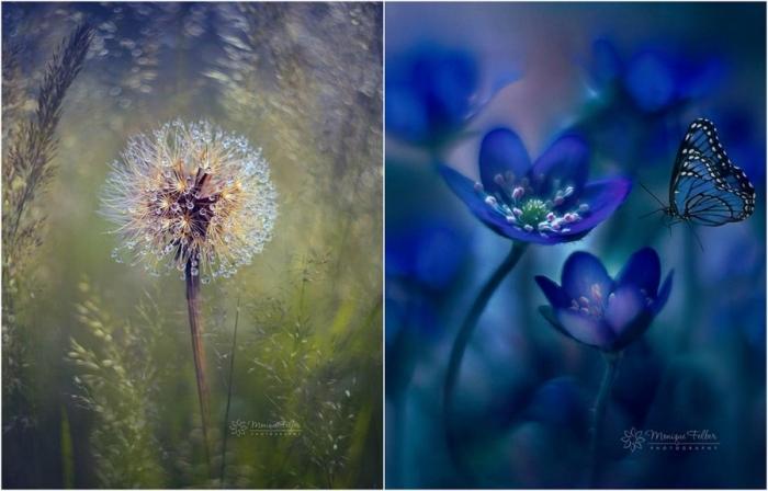 Макроснимки цветов и бабочек Моник Фелбер