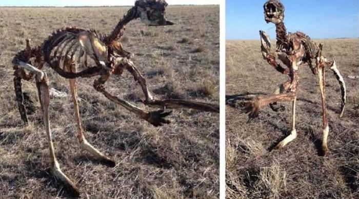 Засуха в Австралии не пощадила кенгуру