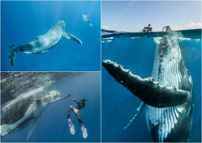 Невероятная фотосессия кита с человеком