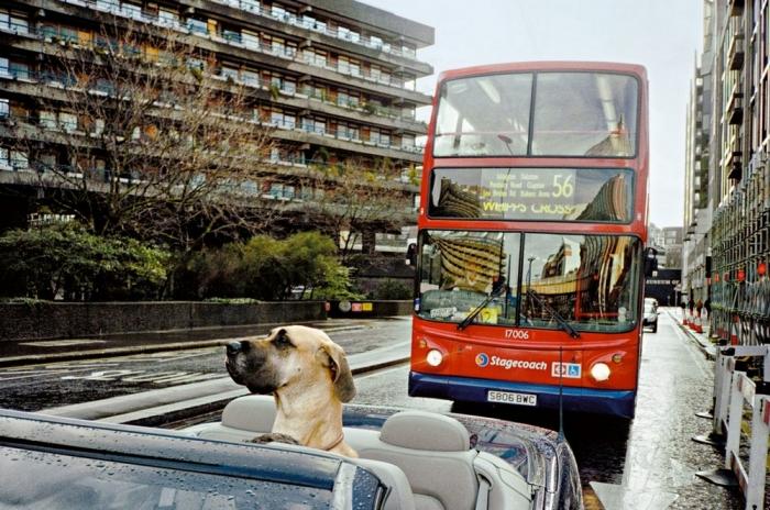 Лондонские улицы на снимках Мэтта Стюарта