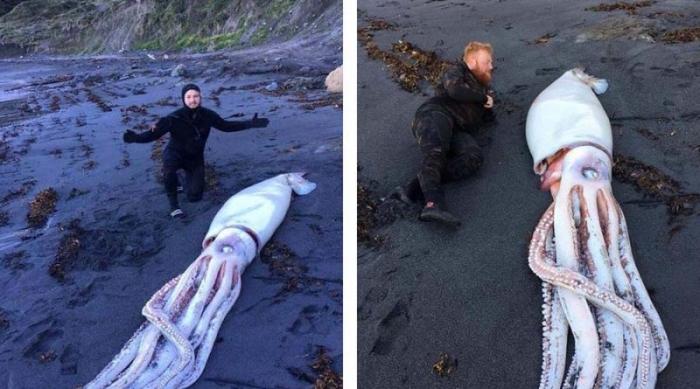 Огромного кальмара выбросило на пляж в Новой Зеландии
