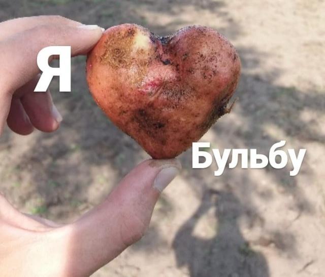 Картофельная лихорадка