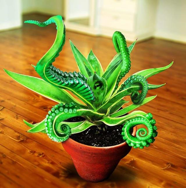 Художники объединили животных и растения с помощью Photoshop