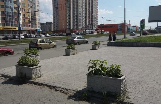 Странные декоративные клумбы в Екатеринбурге