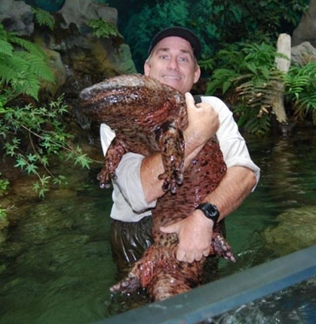 Огромные создания, которые удивляют своими размерами