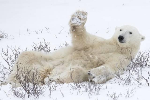 Забавные фотографии диких животных